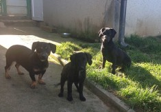 Mama in dve mladički